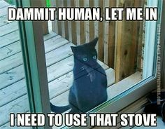 Damnit Human, Let Me In...