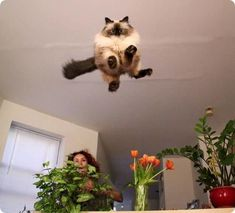 The shortest distance between two points is a straight line, as this cat proves with his impressive jumping skills