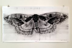 Unknown Saterniid Moth-- new piece by April