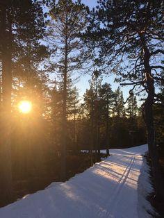 Ski Racing, Cross Country Skiing, Winter Sports, Norway, Sweden, Winter, Winter Sport