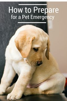 Be prepared for a pet emergency!