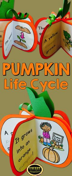 Pumpkin life cycle for students to make - book stands up to make 3D pumpkin!