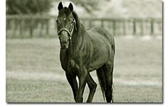 21 Best For Noble empire i love my thoroughbred! images  77085615a6f9