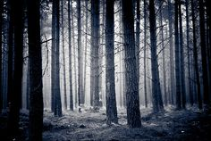 Lost in the trees.....