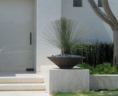 White entrance and landscape design, Dasylirion pedestal pot _