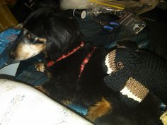 Ravelry: CraftyGal1965's Stuffed Hound - Here is Leo with the Stuffed Hound. Turned out quite cute :)
