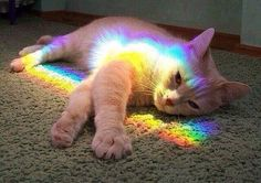 Rainbow cat brings good luck.