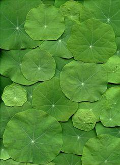 Hojas de plantas acuáticas.