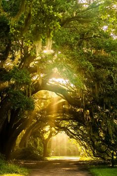 Charleston Tea Plantation, Charleston, S. via Explore Charleston Beautiful World, Beautiful Places, Beautiful Pictures, Beautiful Scenery, Amazing Nature, Belle Photo, Beautiful Landscapes, Beautiful Nature Photography, Landscape Photography