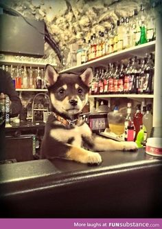 You look like you're having a ruff day. Can I get you a drink?