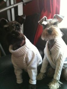 Knitted Dog Sweaters @Suespiosa No pattern. Just cute. Doggie sweaters.nf