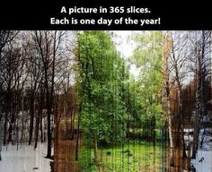 365 slices, each is one day of the year!
