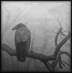 As a carrion bird, ravens became associated with the dead and with lost souls. In Sweden they are known as the ghosts of murdered persons.