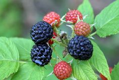 Now Urban Food Foraging is Easier than Ever | The Raw Food World #foodisfree