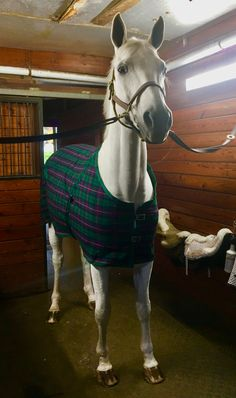 """""""He is looking so cozy in his blanket! Does anyone want to lunge our horses together? Cute Horses, Pretty Horses, Horse Photos, Horse Pictures, Most Beautiful Horses, Horse Stables, Horse Photography, Horse Girl, Horse Breeds"""
