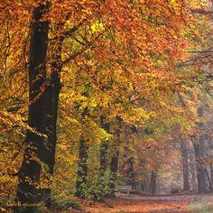 fairy forest - #GdeBfotografeert