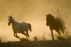 horse cowboy running animals in the wild wild west herding lasso . Office 365 Admin, App Office, Two Horses, Wild Horses, Desert Diorama, Look Office, Microsoft Office, Wild West, Ranch