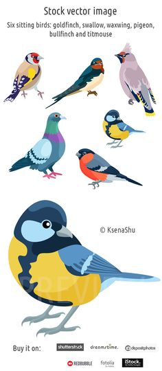 Stock image. Six sitting birds: goldfinch, swallow, waxwing, pigeon, bullfinch and titmouse #stock #vector #birds #titmouse #bullfinch #pigeon #swallow #goldfinch #vectorillustration