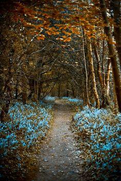 Bluebells in Currabinny Woods, County Cork, Ireland