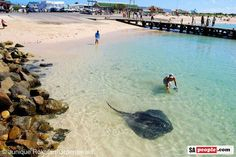 Struisbaai - TAME - YOU CAN FEED IT. Best Fishing, Places Of Interest, Cool Photos, Interesting Photos, Travel Images, Countries Of The World, Holiday Travel, Dream Vacations, South Africa