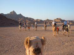 safari egypt