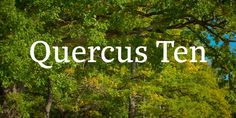 Quercus 10 was designed by František Štorm and published by Storm. Quercus 10 contains 14 styles and family package options. Web Design, Logo Design, Slab Serif, Best Free Fonts, Premium Fonts, Typography Fonts, Cool Fonts, Magazine Design, Dna