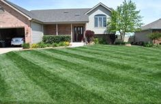My organic lawn - look at those stripes baby!