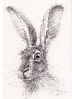 New Stock - ORIGINAL A4 Wildlife Drawing of a HARE Animal Art by Belinda Elliott | eBay