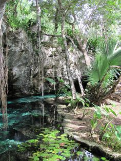 Gran cenote, Tulum, Riviera Maya, Quintana Roo, Mexico