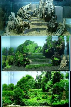 Evolution: terraces in aquascaping Learn of how things have been set up to accomplish similar results in your tank. #TropicalFishKeeping