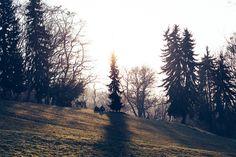 Sonntag, 15.02., 16:05 Uhr – Friedrichshain, Volkspark: A walk in the park. © Andreas Bohlender
