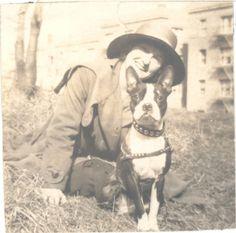 Vintage Boston Terrier by Antique Dog Photos