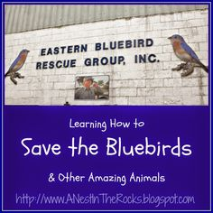 Field Work Friday - Building Bluebird Houses with the Eastern Bluebird Rescue Group @ A Nest in the Rocks