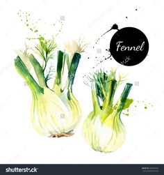 Kitchen Herbs And Spices Banner. Vector Illustration. Watercolor Fennel…