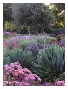 Lambley Nursery, Melbourne  RONNIE - THIS GARDEN IS ONLY WATERED FOUR TIMES A YEAR