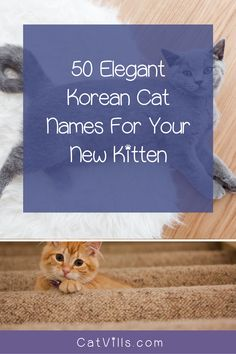 If you're looking for some elegant Korean cat names to honor your heritage, we've got you covered.  We found 50 gorgeous ideas for your brand new kitten, with 25 each for boys and girls.