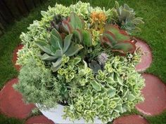 Gorgeous mixed succulents