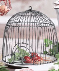 1000 images about bird cages on pinterest birdcages. Black Bedroom Furniture Sets. Home Design Ideas