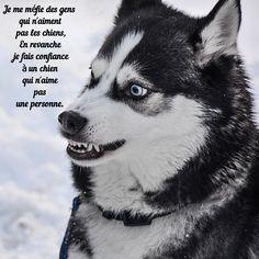 e0cc1d363236c Accessoires chiens, nourriture chien, boutique chien