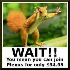 Most businesses cost any where from $100 to $100,000! You can start your own Plexus business for only $34.95!  What are you waiting for?  www.plexusslim.com/kelleylambert Ambassador#: 284208 to get more information and sign up!