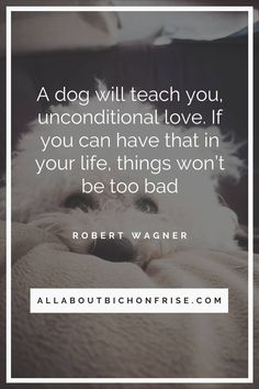 Our dogs are our best friends in the world without a doubt. Show your love and appreciation for these adorable doggos with these 21 inspiring dog quotes. Dog Quotes, Life Quotes, John Grogan, Great Quotes, Inspirational Quotes, Cesar Millan, Read Later, Quote Board, Bichon Frise