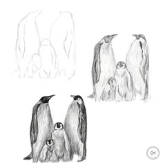 Drawing Skills, Drawing Sketches, Drawing Drawing, Sketch Art, Sketching, Penguin Sketch, Penguin Drawing, Bird Drawings, Animal Drawings