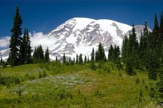mount rainier - We camp here all the time!