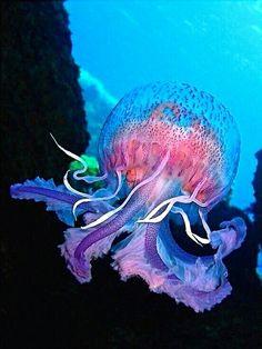 ❤ jellies and fish sea creatures, beautiful ocean, water animals. Underwater Creatures, Underwater Life, Ocean Creatures, Underwater Photos, Underwater Flowers, Under The Water, Life Under The Sea, Under The Ocean, Beautiful Sea Creatures