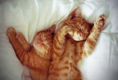 Kittens Lay on the Bed