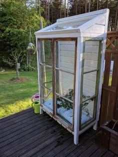 Backyard Greenhouse, Mini Greenhouse, Small Gardens, Outdoor Gardens, Recycled Windows, Small Outdoor Spaces, Garden Yard Ideas, Garden Structures, Dream Garden