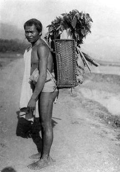 Mengangkut tanaman kopi. Toraja, Sulawesi, 1900-1940