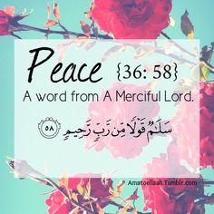 In deze website vind je belangrijke informaties over de vijf zuilen in islam.