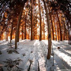 Ski to the sunrise #ski #wood #forest #gopro #fisheye #vsco #sport #hiking #forest #color #l4l #sun #morning #big_shotz #nature #Russia #natureRussia #explore #travel #sunrise #bestsunrise #instasunrise #natureporn #landscape #vscogood #sunny #winter #fisheyeclub #behero #vscogood #daily @originaloutdooradventurephotos #khvoinaya
