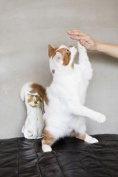 今年もどんこカレンダー発売します Fur Babies, Cute Animals, Cats, Kitten, Dog Cat, Dogs, Pretty Animals, Gatos, Kitty Cats
